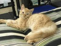 Feline Omar Special Needs's story Please contact Monica