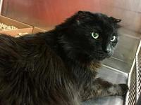 FELIX's story Felix is a senior cat who is very
