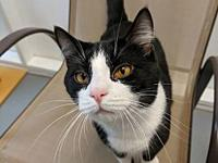 Felix's story This cutie pie is sure to win your heart!