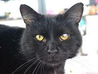 Felix *Special Adoption Fee's story I'm 1 year old! I