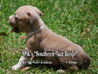 "Here is a wonderful ""Southern Bluz"" Female Pup. She is"