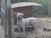 Last doggie, say goodbye after she is gone. Nkc