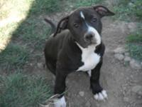 Gorgeous female, black with white markings. Great