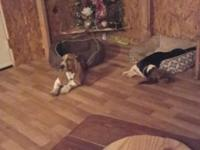 We rescued a female basset puppy but I had to pay to