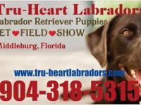 Tru-Heart Labradors has one beautiful black female