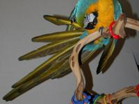 Female Blue and Gold Macaw With Cage Liz is