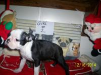 only 2 girls left we have 2 girls they are 8 weeks old
