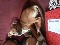 I have a five month old female boxer puppy I am needing