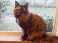 We have a female Calico Cat named Tiggy. She is simply