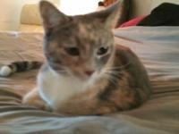 Grey white orange female cat wellbeing well trained