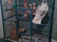 Hi I have a females cockatoo she is 4 years old she