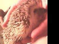 I have a hedgehog that is alittle over 7 weeks old. Ive