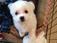 I am trying to find a new house for my Maltese new