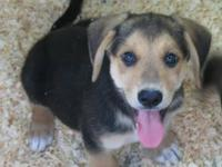 I am in search of a loving home for a female mix breed