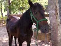 full blooded mustang mare, loves people, loves