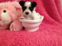 I have two female Papillon puppies for sale. These