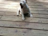 We have 3 beautiful female pitbull puppies left for