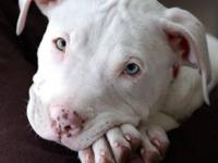 I want a female pitbull puppy for a pet. I have one dog