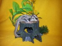 I have a beautiful female platinum sugar glider. She