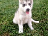Meet Dakota, what a sweet little playful baby girl she