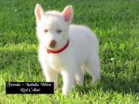 Female Siberian Husky Puppies ~~~~~~~~~~~ Puppies are