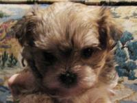 I have a toy maltese/yorkie (morkie). Ive had her for 3