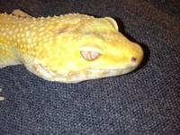 I'm looking to trade this Beautiful Female Tremper