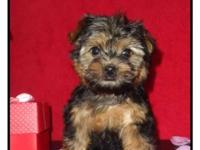 We have cute Yorkipoos females that are ready to be