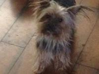 I have a female 4 year old Yorkie. She is approx 5