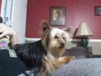 I have a female yorkie that I'm rehoming . She will be