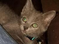 Fendi's story Hi I'm Fendi, a lil guy right now. I know