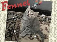 Fennel's story All of our kittens are in various foster