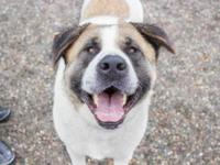 Fenton is a big, beautiful and happy boy looking for a