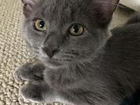 Fergie18's story All Purr Partners Adoptable Cats