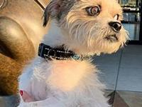 My story Ferguson Fergie is a 2 yr. old terrier mix and
