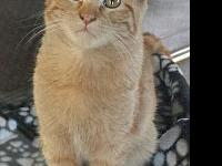 Fergus's story Fergus is a young male kitty with plenty