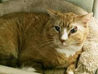Ferguson's story Meow! My name is Ferguson. I am a male