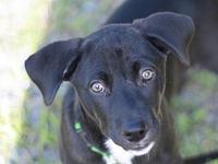 Ferguson's story This puppy is in Tennessee. Adoption