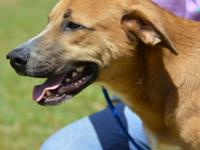 Fern is a 1 year old, 54 pound, hound mix. He's a shy