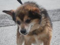 Fernando's story Fernando is a 6 year old Pom mix who