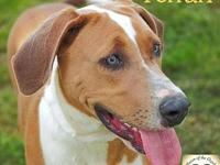 Ferrari's story Ferrari was adopted from the Haven and