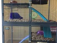2 level ferret cage that has two ladders and two