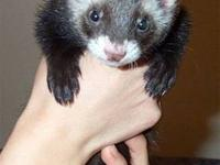 I have a ferret, cage, and all the supplies needed for