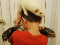 This is a general listing for Ferrets. We do not have