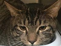 Festus's story Festus is a young cat who would love to