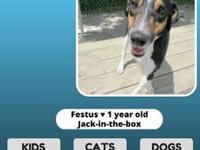 Festus's story I am a 1 year old active