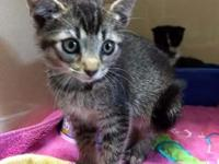 Fettuccine's story Five female kittens were brought to