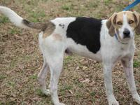 3/22 ~ Please share Ficklin! He is now available for
