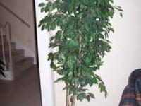 Have a 6 foot silk/ficus tree for sale in a gold base.