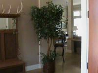 7' synthetic ficus tree with 3 trunks and additional